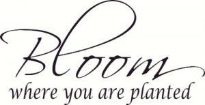 Bloom where you are planted bible verse Vinyl Wall Decal